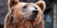 В Сочи медведи загрызли в вольере мальчика