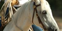 В Москве наездница избила девушку из-за оплаты конной прогулки