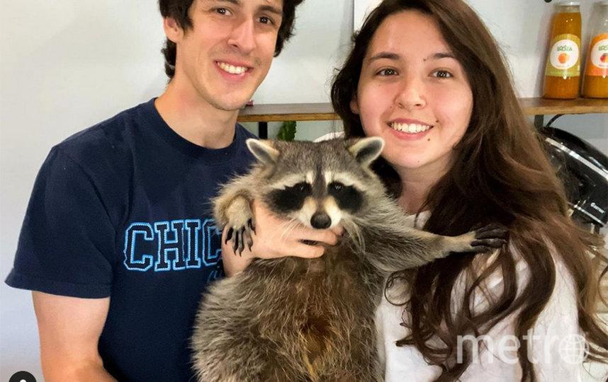 Чито позирует со своей человеческой семьёй. Фото Instagram @titotheraccoon