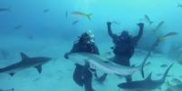 Майк Тайсон сразился с акулой