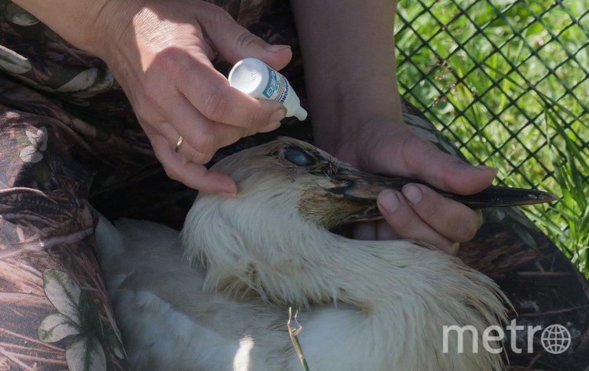 """У этого аистёнка – глазная инфекция. Марина надеется, что он скоро вылечится и переедет к другим птицам. Фото Алена Бобрович, """"Metro"""""""
