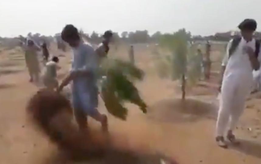 Деревья вырывали из земли прямо с корнем. Фото india times, Скриншот Youtube