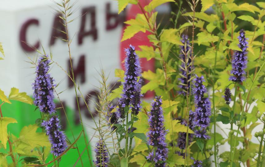 """Фестиваль """"Сады и люди"""" будет ждать гостей до 23 августа. Фото Василий Кузьмичёнок, """"Metro"""""""
