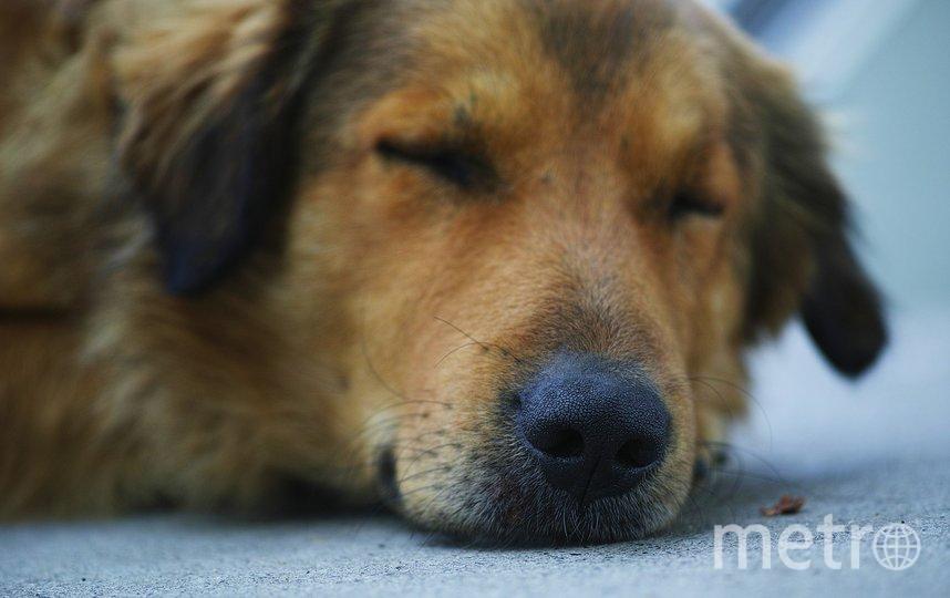 """В этом году день бездомных животных прошел 15 августа. Фото pixabay.com, """"Metro"""""""