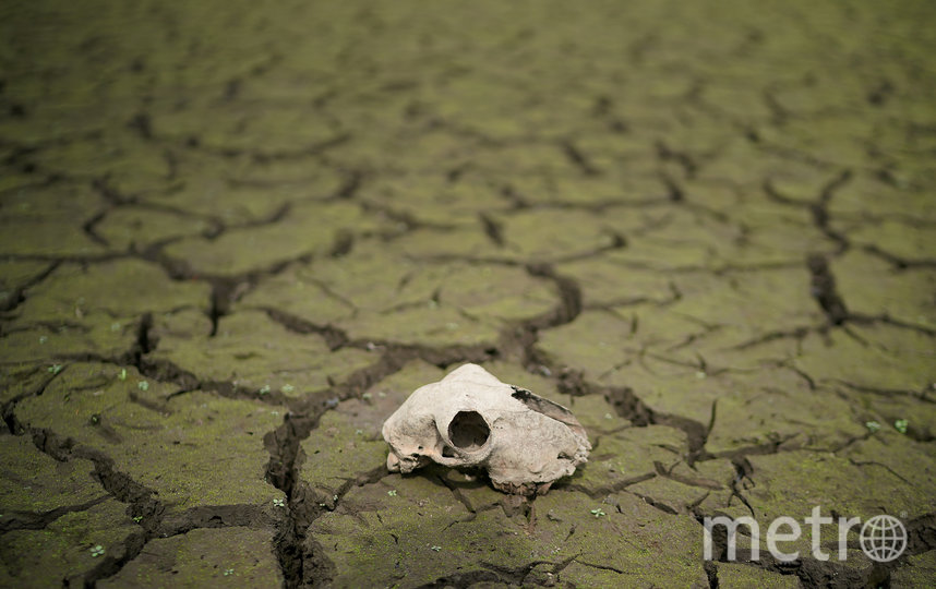 Засуха негативно влияет почти на все сферы экономики, поэтому её важно научиться прогнозировать. Фото Getty