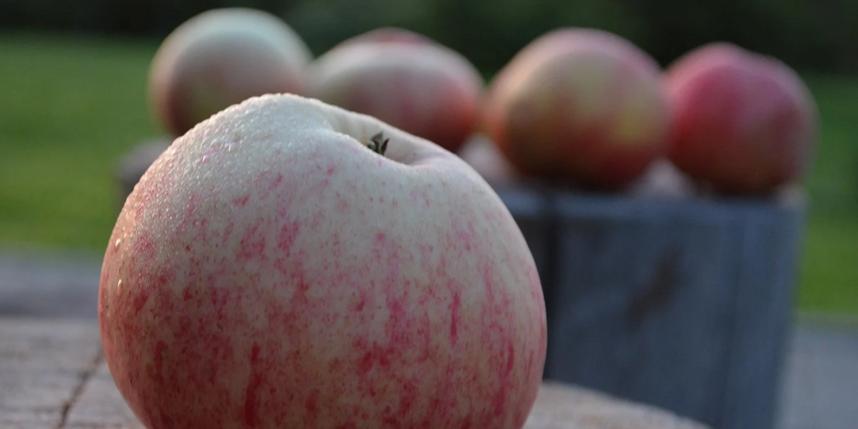 Яблочный спас 2020: как отпраздновать и загадать желание 19 августа