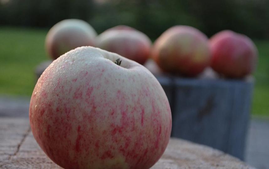 С Яблочным спасом! Фото Pixabay
