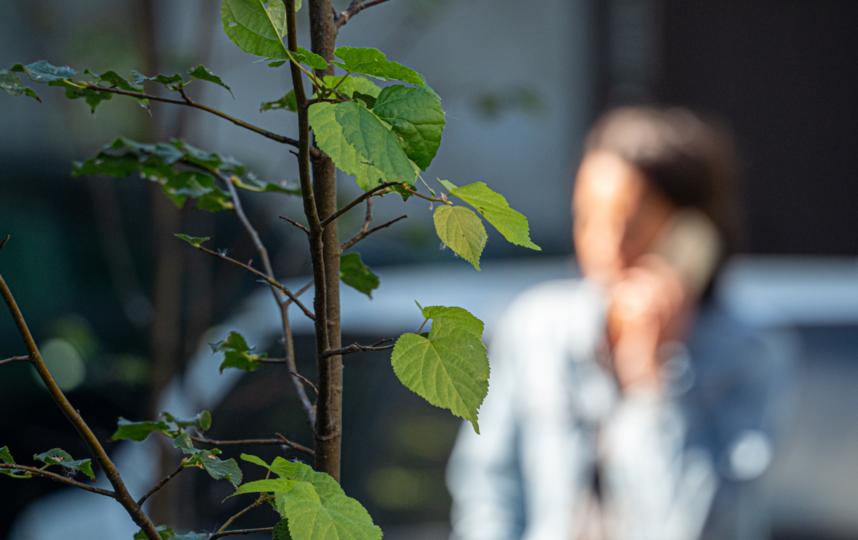 """Принципы городского озеленения – это прежде всего устойчивость к среде. Оно улучшает физическое и психологическое здоровье людей. Фото Святослав Акимов, """"Metro"""""""
