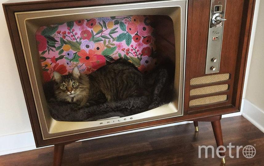 Кот в винтажном телевизоре. Фото Instagram @floofincat