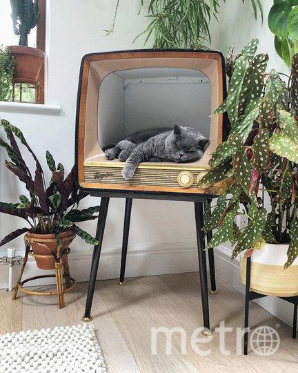 Многим котам телевизоры понравились больше, чем коробки. Фото Instagram @bamaluzhome