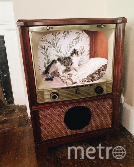 Котам в телевизоры кладут подушки. Фото Instagram @katemillett1