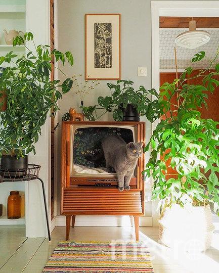 Животные наслаждаются жизнью в новых необычных домиках. Фото Instagram @vintageinteriorxx