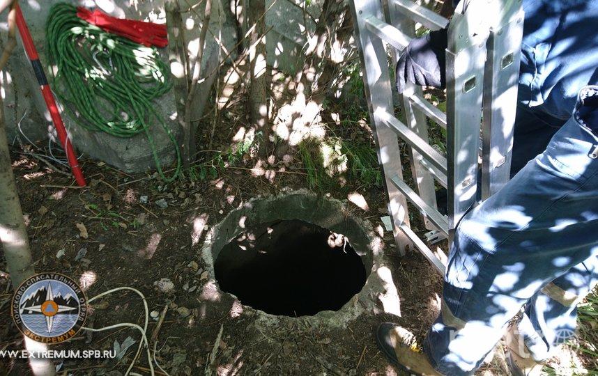 Из люка спустя двое суток спасли упавшую собаку. Фото vk.com/koshkispas.