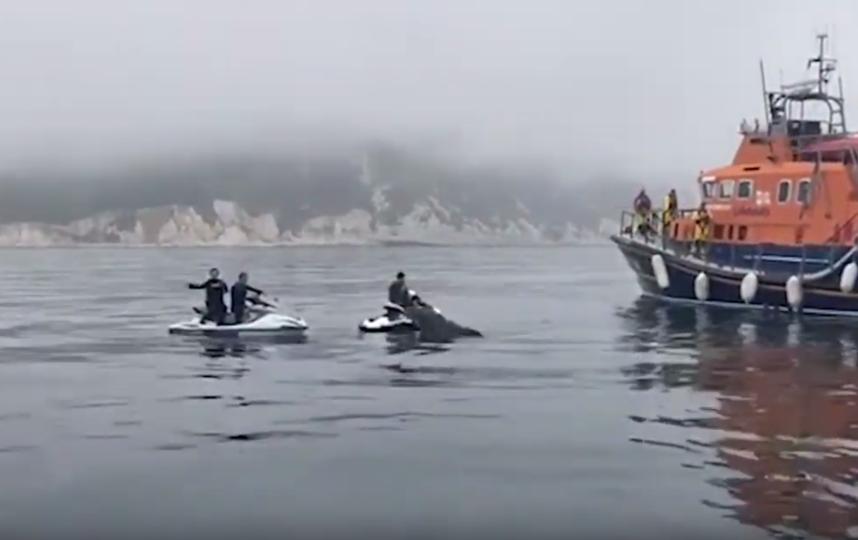 На момент пожара дельфины были в 3 км от места происшествия, однако присоединились к местной лодке, откликнувшейся на сигнал бедствия. Фото Скриншот Youtube