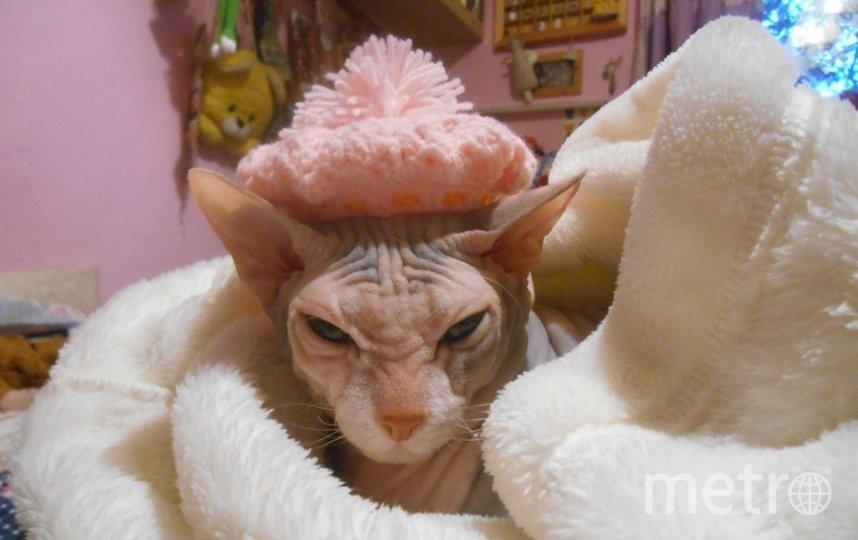 """Нашу кошку зовут Фрося. Ей 11 лет. Любит наряжаться в бусики, шляпки и меховые боа) настоящая артистка и звезда. Фото Смирнова З.Е., """"Metro"""""""