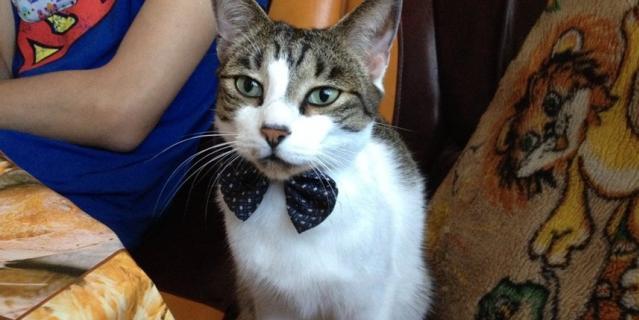Наш интеллигентный кот Кузя очень Любит носить бабочки, как будто собирается на премьеру спектакля. Кузнецова Наталья.