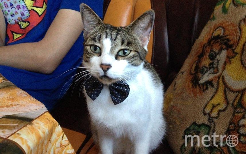 """Наш интеллигентный кот Кузя очень Любит носить бабочки, как будто собирается на премьеру спектакля. Кузнецова Наталья. Фото """"Metro"""""""