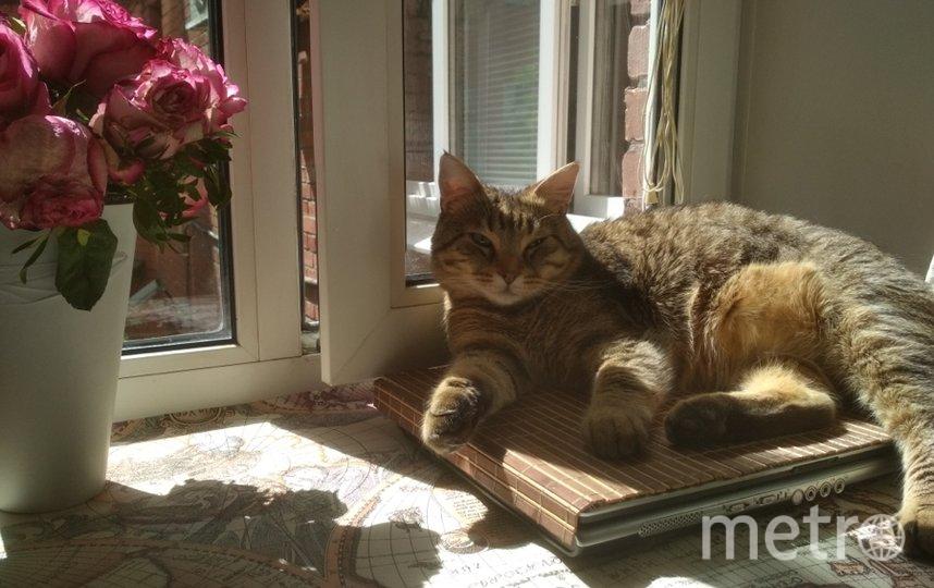 """""""То ли работу поискать, то ли мультики посмотреть... Подумаю об этом завтра!"""" Утро любимого кота Нюсика. Фото Ксения., """"Metro"""""""
