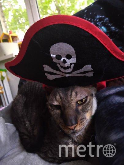 """Направляю фото своего кота Парфея в образе """"Пират Карибского моря""""! Наш питомец - настоящий артист, всегда чем-нибудь рассмешит). Фото Мамончикова Алина, """"Metro"""""""