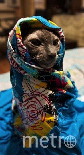 """Знакомьтесь, кошка Нюша, любительница тепла и ярких платков! Вот так может сидеть очень долго - тепло и уютно. Фото """"Metro"""""""