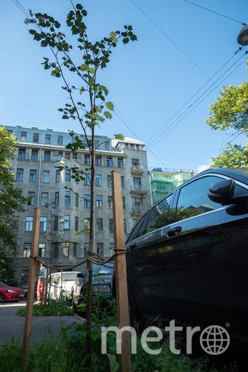 """Молодые липы на Некрасова. Фото Святослав Акимов, """"Metro"""""""