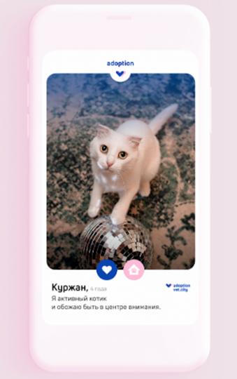 По результатам теста мне предложили милого кота по имени Куржан. Фото cкриншот теста на сайте www.vet.city