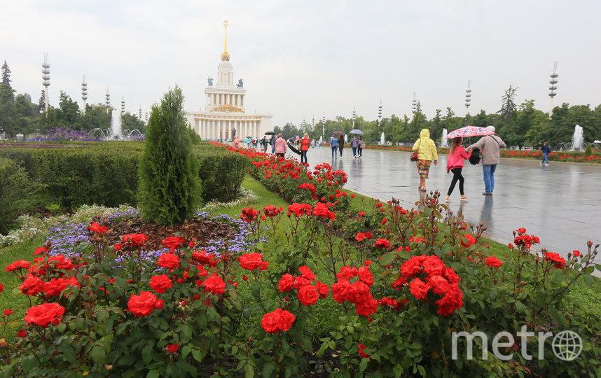 ВДНХ в конце лета превратилась в царство цветов. Фото Василий Кузьмичёнок