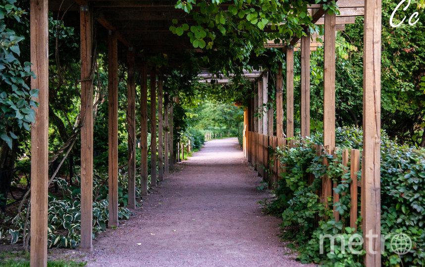 Гости фестиваля смогут послушать музыку под кронами вековых деревьев Ботанического сада. Фото Предоставлено организаторами