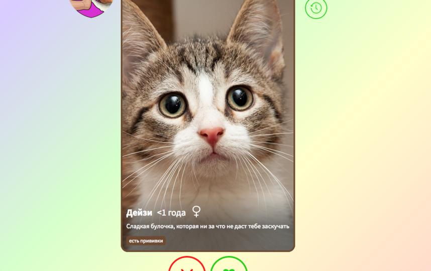 """MetPet — это первый сайт-агрегатор питомцев из приютов. Фото Скриншот https://metpet.io/ru/, """"Metro"""""""