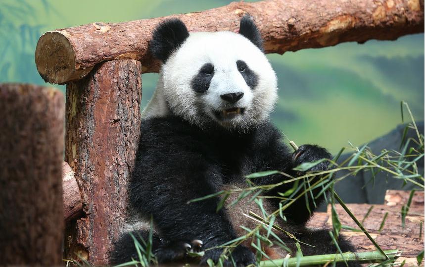 Наблюдать за животными с 1 сентября можно будет с с 09:00 до 20:00. Фото Василий Кузьмичёнок