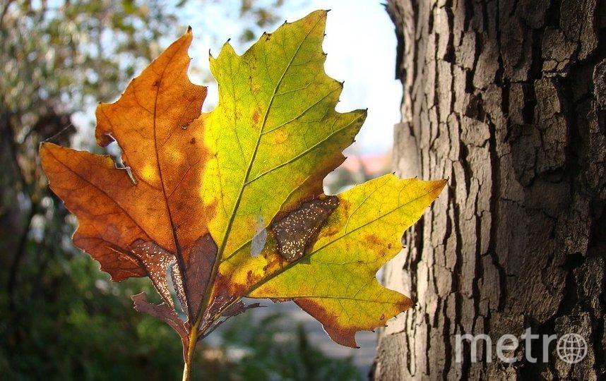В сентябре природа вокруг нас преображается: листва на деревьях окрашивается в золотистые, рыжие, красные оттенки. Фото pixabay.com, архивное