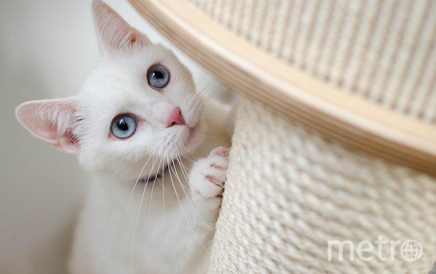 """Многие владельцы не обращаются к ветеринарным врачам без крайней необходимости, чтобы не вызвать у кошки стресс. Фото pixabay.com, """"Metro"""""""