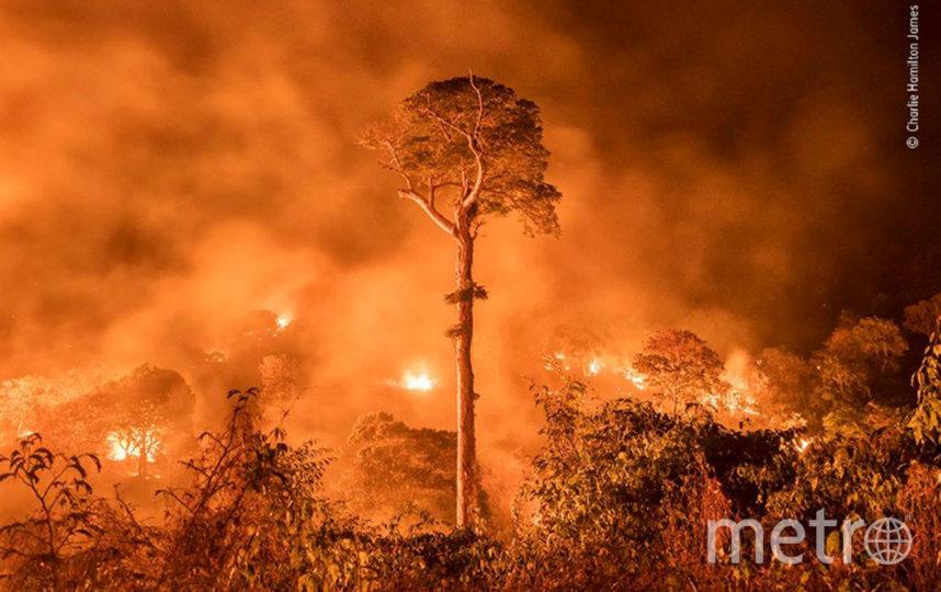 "Работа ""Горящие леса Амазонки"". Фото Hamilton James  GPOTY"