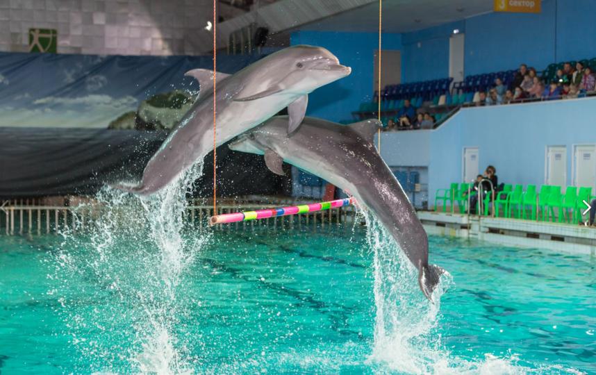 Зрители снова  смогут снова увидеть шоу с дельфинами. Фото vk.com/dolphinarium.