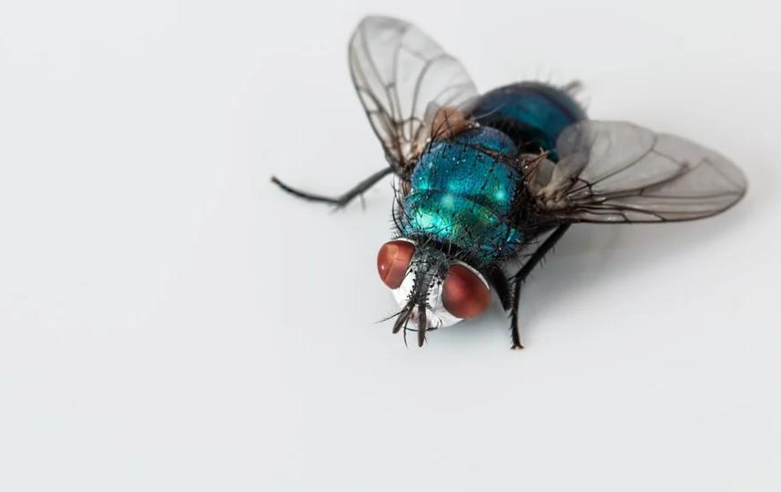 Мужчина попытался убить насекомое с помощью электрической мухоловки. Фото Pixabay.