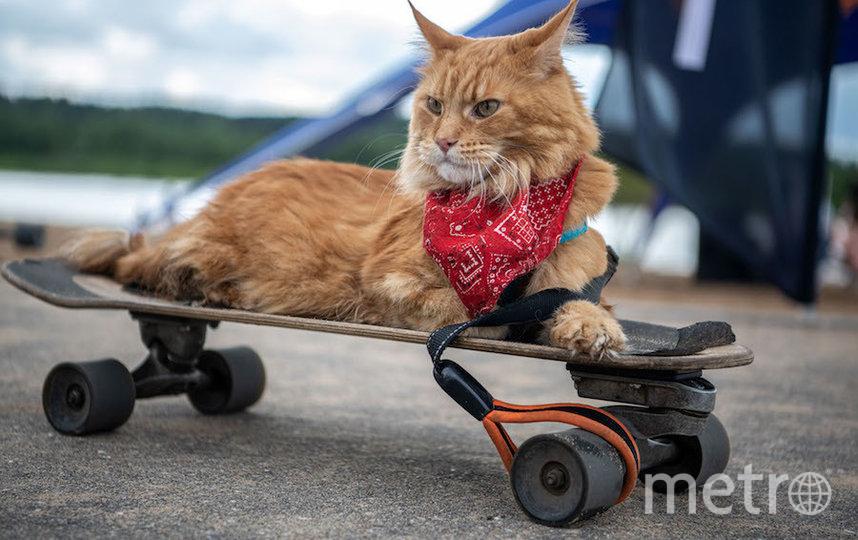 Boardriders fest проходит уже не первый год. Фото Роман Зинченко