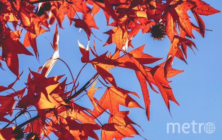 Понедельник 7 сентября был последним днём первой серии бабьего лета. Фото pixabay.com