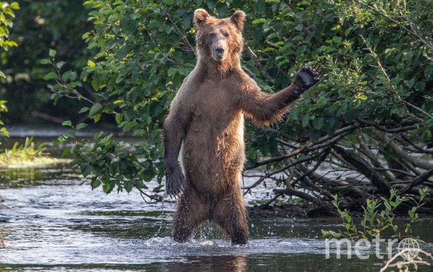 "Работа финалиста конкурса ""Всем привет!"". Фото Eric Fisher / Comedy Wildlife Photo Awards 2020."