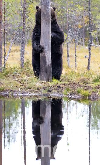 Работа финалиста конкурса. Фото Esa Ringbom / Comedy Wildlife Photo Awards 2020.