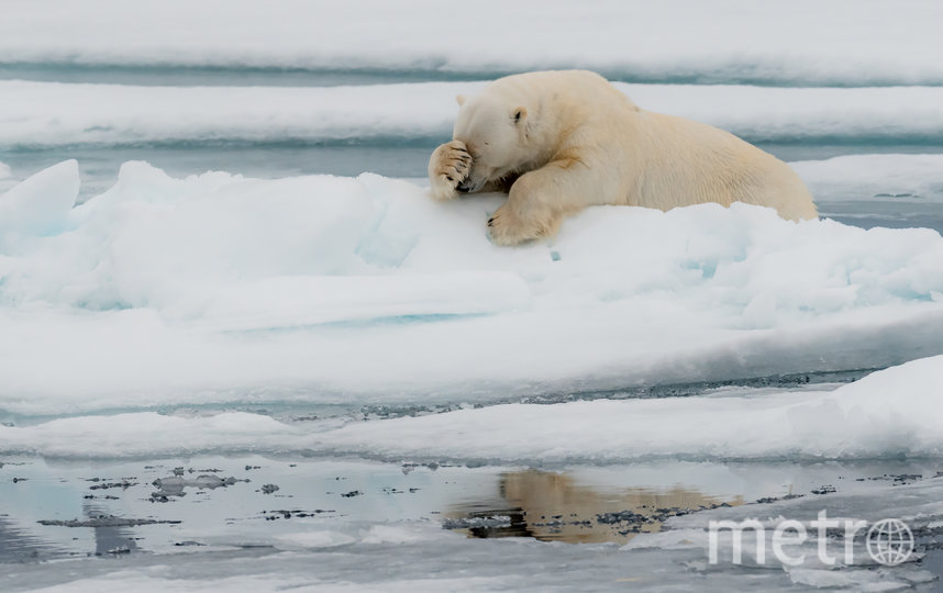 Работа финалиста конкурса. Фото Jacques Poulard / Comedy Wildlife Photo Awards 2020.