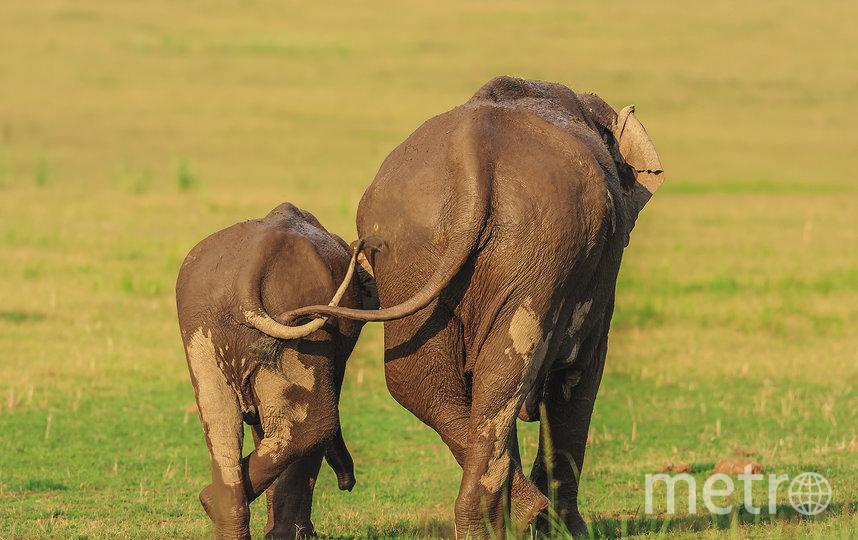 Работа финалиста конкурса. Фото Jagdeep Rajput / Comedy Wildlife Photo Awards 2020.