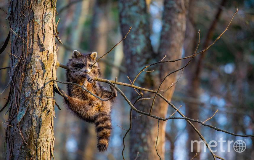 Работа финалиста конкурса. Фото Jill Neff / Comedy Wildlife Photo Awards 2020.