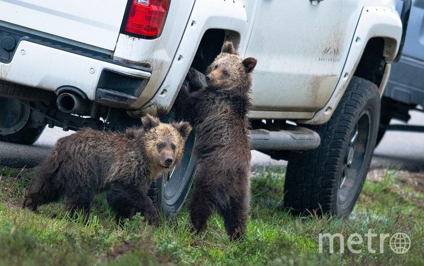 Работа финалиста конкурса. Фото Kay Kotzian / Comedy Wildlife Photo Awards 2020.