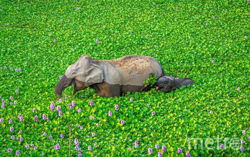 Работа финалиста конкурса. Фото Kunal Gupta / Comedy Wildlife Photo Awards 2020.