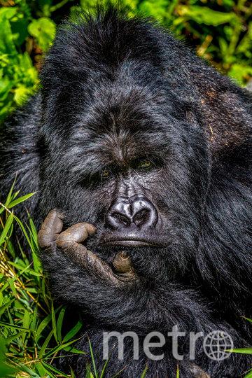 "Работа финалиста конкурса ""Скукотища"". Фото Marcus Westberg / Comedy Wildlife Photography Awards"