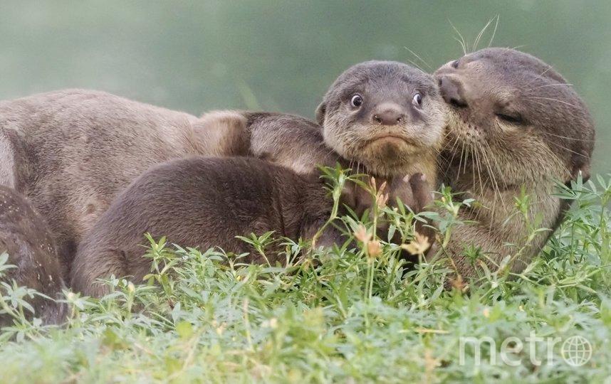 "Работа финалиста конкурса ""Последний день летних каникул"". Фото Max Teo / Comedy Wildlife Photography Awards"