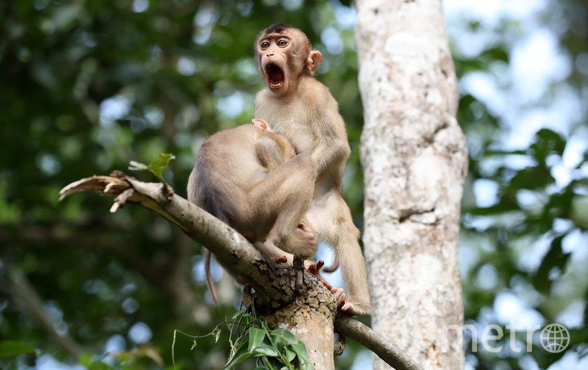 "Работа финалиста конкурса ""Шуры-муры"". Фото Megan Lorenz / Comedy Wildlife Photography Awards"