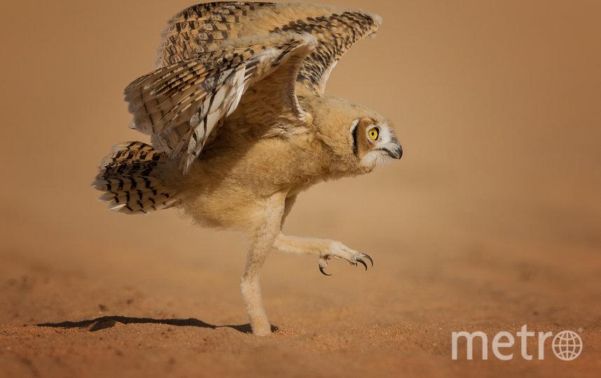 Работа финалиста конкурса. Фото Nader Al-Shammari / Comedy Wildlife Photo Awards 2020.