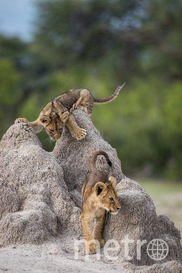 "Работа финалиста конкурса ""Попался на этот раз!"". Фото Olin Rogers / Comedy Wildlife Photo Awards 2020."