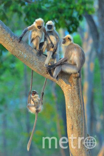 """Работа финалиста конкурса """"Развлечение на любой возраст"""". Фото Thomas Vijayan / Comedy Wildlife Photo Awards 2020."""
